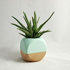 MINT + WOOD GEOMETRIC SUCCULENT PLANTER available to purchase in the decor8 shop!