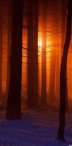 ✿ڿڰۣ Orange light thru the trees....   #photography #nature