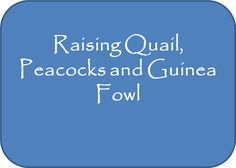 Raising Quail, Peacocks and Guinea Fowl