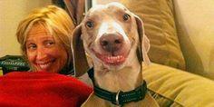 Smiling dog (via 1Funny.com, http://aka.ms/smilingdog) - かわいい! かわいい、犬!