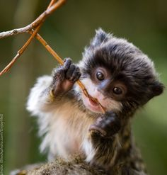 If you know what kind of monkey this is, please let me know! I think it looks like a baby Ewok.