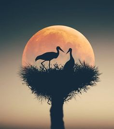 Tips And Tricks For Taking Memorable Pictures Moon Pictures, Nature Pictures, Moon Photography, Amazing Photography, Boudoir Photography, Beautiful Moon, Beautiful Birds, Oil Pastel Drawings, Image Nature