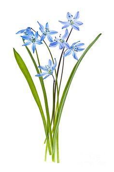Blue Spring Flowers Photograph by Elena Elisseeva