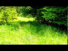 Sorinel Ghita-Come Back to Me - YouTube