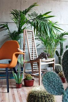 These colors! #plants #interiors #cacti