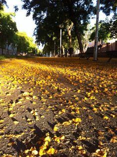 Avinguda Bogatell (Barcelona) un matí de primavera