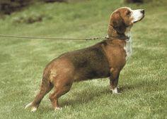 drever dog photo   Ügyfélszolgálat