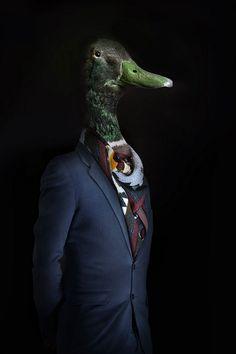 contemporary art mister-duck mister-duck