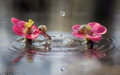 Ripple: The snails look on as the waterdrops hit the surface of the pond