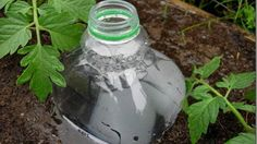 author says: punch two holes in the bottom and two holes in the side and plant the bottles in the soil next to your plants.    Fill the bottles with water and the plants in that area should get a slow steady watering for up to a week as water leaches into the soil.