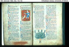 medieval herbs and plants - Szukaj w Google
