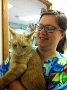 Kansas, Nebraska beyond: $$$ urgently requested for 2 Cerebellar Hypoplasia Kitties with serious UTI Rescued by a Dachshund Rescue!
