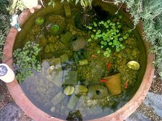 This is my #pond. We have five #goldfish; Lucky, Finny, Fatty, Stripey and Thingy.    We bought the pond itself from an outdoor pots manufacturer. It did not need lining as its not porous. if it is porous, a transparent plastic should be fine but covered with rocks and water plants so it doesnt overheat. if you do buy something like this for a pond, ie a base for an outdoor pot that was not originally made TO be a pond, make sure with the seller that the structure isnt coate