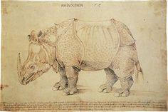 Dürer's Rhinoceros - Wikipedia