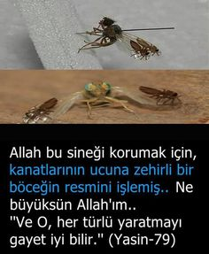Bilgi Islamic Images, Allah Islam, Wtf Fun Facts, Interesting Information, Quran, Did You Know, Ale, Religion, Photos