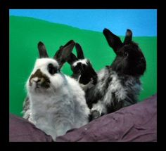 Tranquility Trail Animal Sanctuary rescue bunnies! Adoption is an eco-friendly option if you want a rabbit!