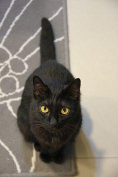 i love my 2 black kitties! <3