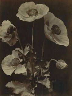 Des Fleurs Pour Algernon, Aubry, Wall Collage, White Photography, Still Life, Illustrations, Drawings, Artwork, Prints