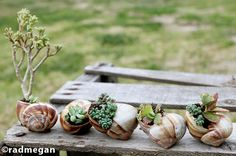 Discover Lifestyle: DIY Miniature Garden With Seashells (to give on my wedding day :) so cute!)