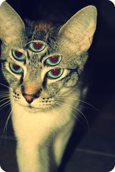 Have you ever had a marijuana brownie or cake and got so sick your cat has five eyes? It is important to have the right amount of THC to get high, not sick!