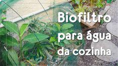 Veja um biofiltro que trata as águas cinzas da cozinha (Minutos Extras)