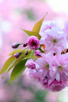 Cherry blossom by Jiří Kaufner on 500px