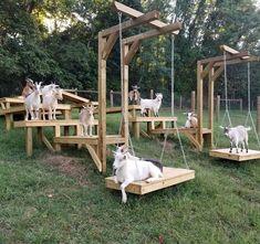 Goat shelter / jeux pour chèvres / toys for goats / abri chèvres The Farm, Mini Farm, Small Farm, Goat Playground, Goat Shed, Goat Shelter, Horse Shelter, Goat Care, Dwarf Goats