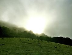 Rural Scottish Sunrise by Caroline Reyes-Loughrey