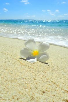 Summer vibes on the tides ♥ Strand Wallpaper, Ocean Wallpaper, Summer Wallpaper, Flower Wallpaper, Nature Wallpaper, Wallpaper Backgrounds, Iphone Wallpaper, Beautiful Flowers, Beautiful Pictures