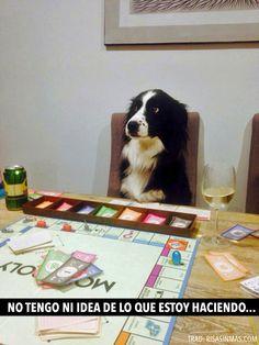 Y pos na' aqui podemos contemplar un perro jugando al monopoly...algo que se ve TODOS los días