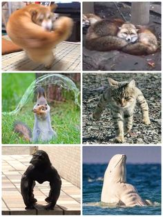 Funny Minion Memes, Funny Disney Memes, Cute Memes, Stupid Funny Memes, Cute Funny Animals, Funny Cute, Animals And Pets, Baby Animals, Yandere Simulator Memes