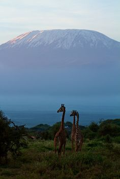 Amboseli National Park and Mount Kilimanjaro / Kenya ! https://jesseyjay9.wordpress.com/2015/08/24/cheap-flights-africa/ ...... Also, Go to RMR 4 awesome news!! ...  RMR4 INTERNATIONAL.INFO  ... Register for our Product Line Showcase Webinar  at:  www.rmr4international.info/500_tasty_diabetic_recipes.htm    ... Don't miss it!