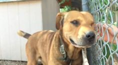 Dog Chained Up For A Decade Has The Sweetest Reaction To Being Set Free