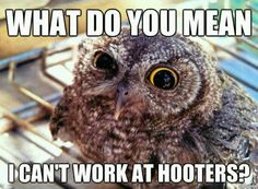 what do you mean i can't work at hooters !? cute funny owl