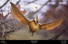 Fake-Tastic Beasts and Where to Find Them!-Journal Entry 06-Golden Snidget, Michael Mowat on ArtStation at https://www.artstation.com/artwork/PkalB