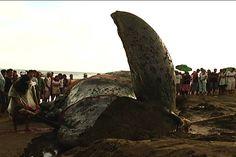 PHL study finds increasing number of marine mammal strandings