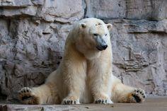 Polar Bear by Richard Keeling on 500px