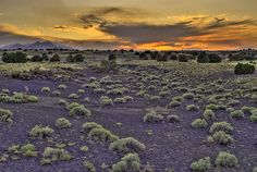 Looking west to Sunset Crater Volcano National Monument - AZ  by kilr_pics, via Flickr