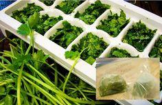 Cómo congelar y preservar Hierbas frescas en Aceite de Oliva.