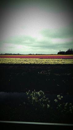 Floeer fields