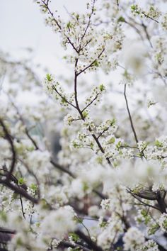 What is your favorite season? Mine spring and autumn. Here is already spring Love Cherry Blossom ✨ Cherry Blossom Art, Greek Gods And Goddesses, Spring Is Here, Hello Spring, Spring Time, Kew Gardens, Beautiful Places To Travel, Little Flowers, Flowers Nature