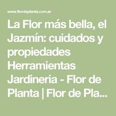 La Flor más bella, el Jazmín: cuidados y propiedades Herramientas Jardineria - Flor de Planta | Flor de Planta