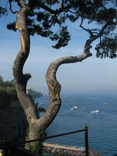 Sorrento, Italy. This place won my heart, would return in a flash. The whole Amalfi Coast is stunning
