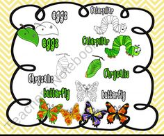 Butterfly Life Cycle Clip Art Collection product from The-3AM-Teacher-Designs on TeachersNotebook.com