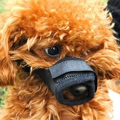 Dog Muzzles - Lovely Baby Best Adjustable Pet Dog Muzzle Mesh Mask Lightweigh Anti Biting and Barking Dog Mouth Cover Muzzles three sizes offered LYMuzzles001M -- Click image for more details. (This is an Amazon affiliate link)