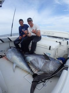 Image Bass Tournaments, Tuna Fishing, Salt Water Fish, Big Game, Action, Articles, Community, Nice, Image