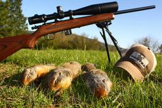 5 Tips To Find Best 22lr Scope For Squirrel Hunting