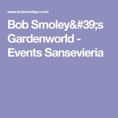 Bob Smoley's Gardenworld - Events Sansevieria