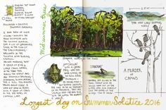 Jan Blencowe's Sketchbook Hypothesis: 7 Steps to Creating a Nature Journal Page Layout | Nature journal, Journal pages, Sketch book Garden Journal, Nature Journal, Sketchbook Inspiration, Journal Inspiration, Journal Ideas, Journal Layout, Journal Pages, Grimoire Book, Scientific Journal