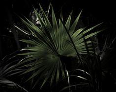 Tropical Leaf No.1, Nature Photography, Mexico Landscape Art, Green, Minimalist, Natural, Plant, Botanical. by MerakiPaper.